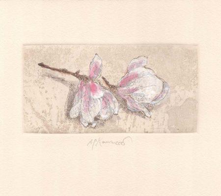 Anton Paul Kammerer - Magnolienblüte